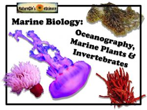 Marine Biology Fall 6-week Live or Recorded Course - Oceanography, Marine Plants & Invertebrates