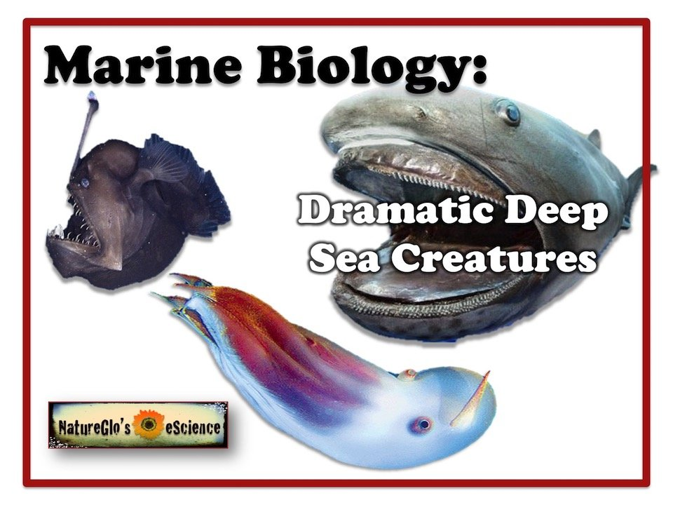 Dramatic Deep Sea Creatures online course