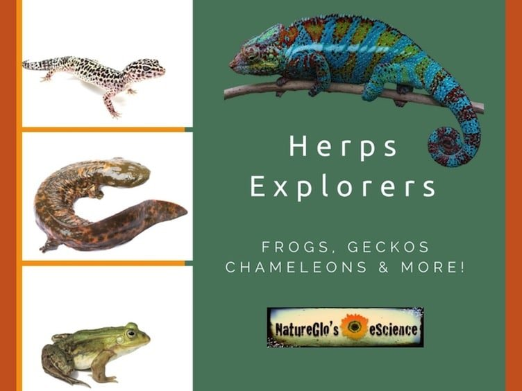 reptiles and amphibians k-12 online class